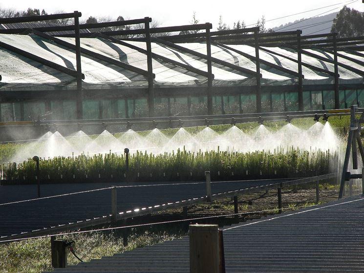 impianto di irrigazione di tipo nebulizzante