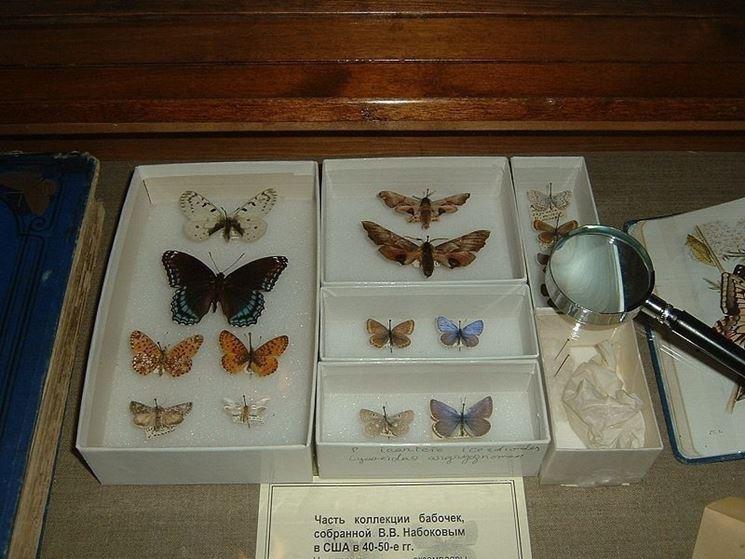 Farfalle fissate con puntine