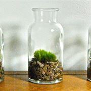 piante in bottiglia