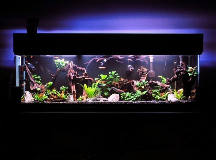 Come costruire un acquario tecniche fai da te for Arredare un acquario fai da te
