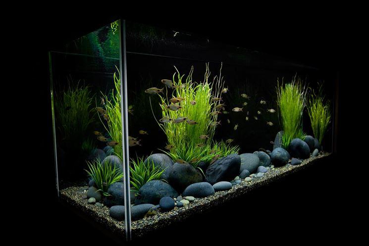 Vegetazione acquario