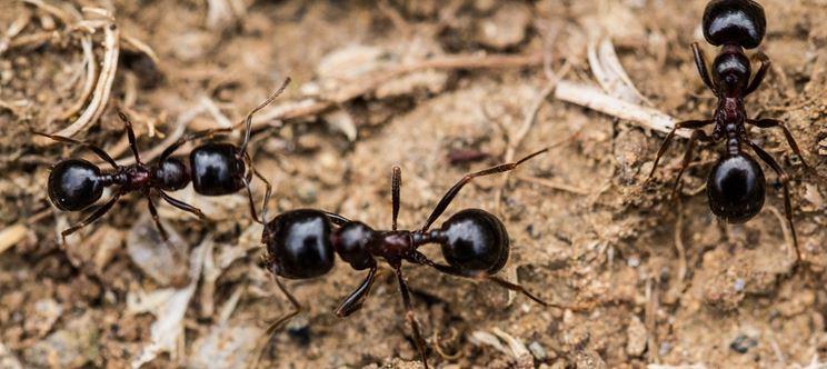 Come eliminare le formiche dalla casa tecniche fai da te liberare casa formiche - Come eliminare le onde elettromagnetiche in casa ...