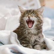 gatto in casa