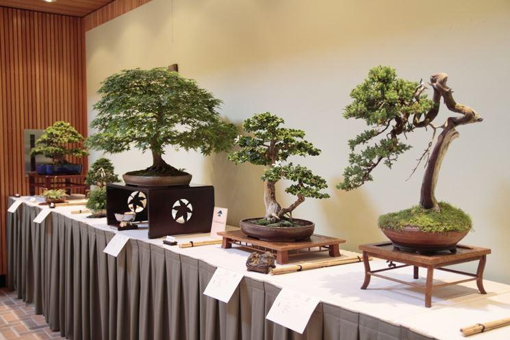 Esposizione bonsai