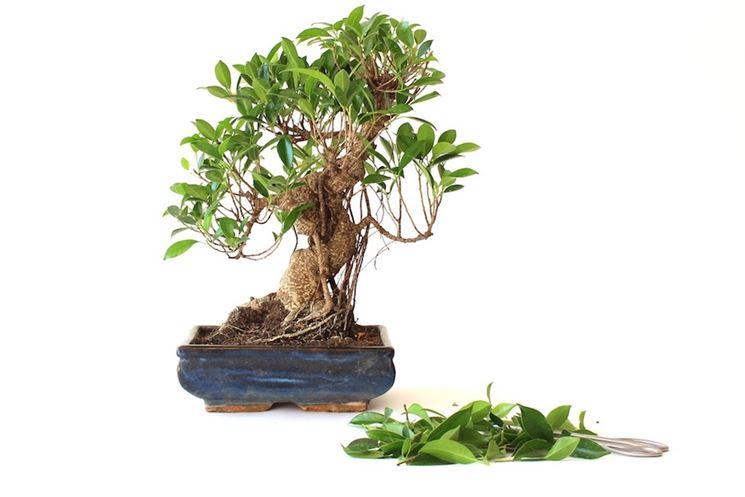 Foglie bonsai