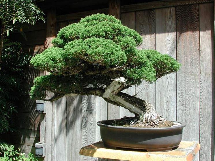 curare malattie bonsai