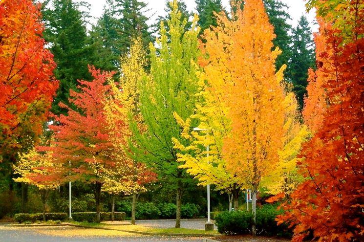 Alberi caducifoglie in autunno