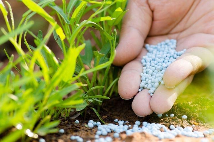Fertilizzante piante