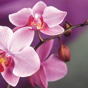 Sezioni botaniche di orchidea