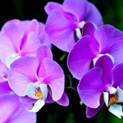 Esemplare di orchidea