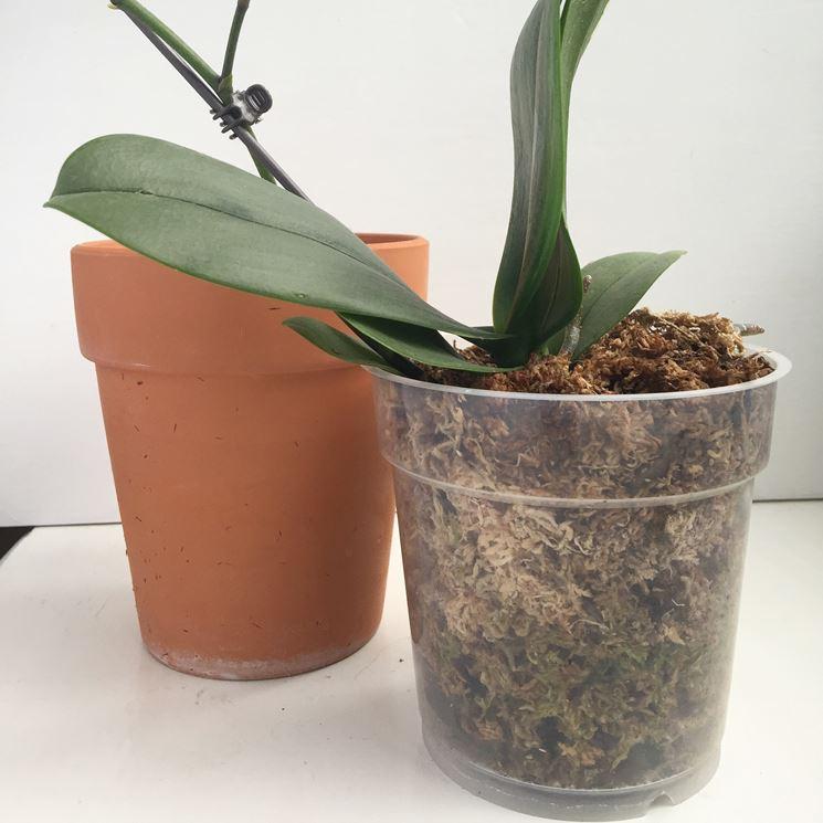Diversi tipi di terreno per orchidee
