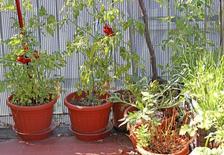 pomodori in vaso