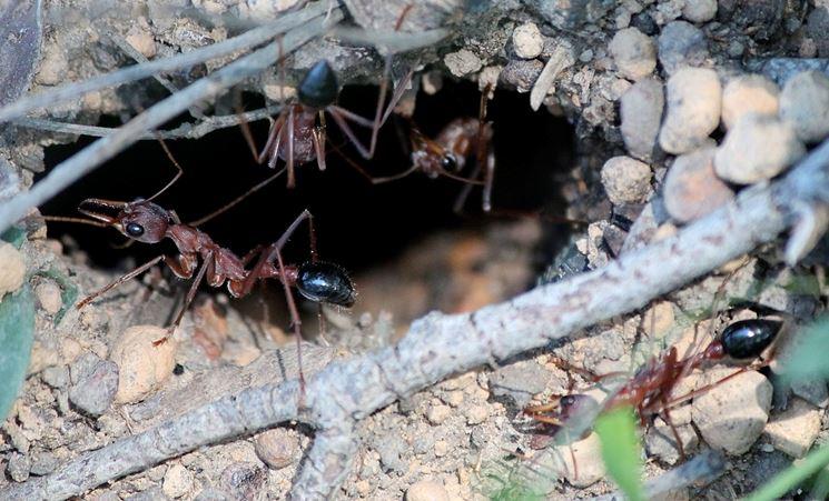 Tana di formiche
