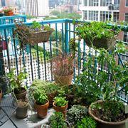 Piccolo orto sul balcone