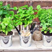 Erbe aromatiche coltivazione