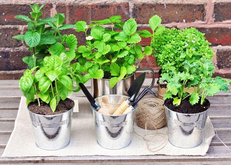 Le Piante Aromatiche : Piante aromatiche in casa orto coltivare