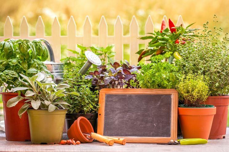 Erbe aromatiche in vaso e in cucina