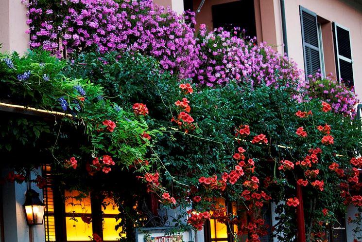 Arredare con piante da fiore