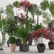 Esemplari di piante da appartamento
