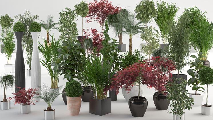 Come coltivare le piante da appartamento piante da for Piante e fiori da appartamento