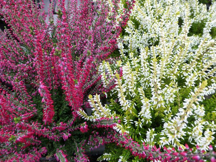 Fiori e piante piante da appartamento consigli per for Piante e fiori da appartamento