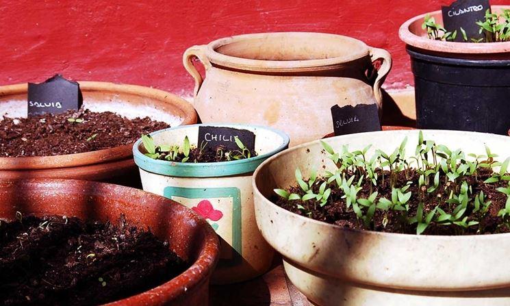 vasi con piante aromatiche