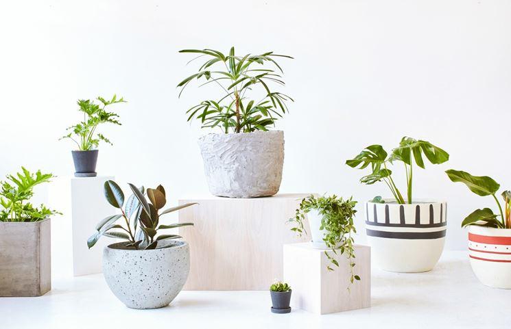 Piante da vaso piante da appartamento scegliere le for Piante e fiori da appartamento