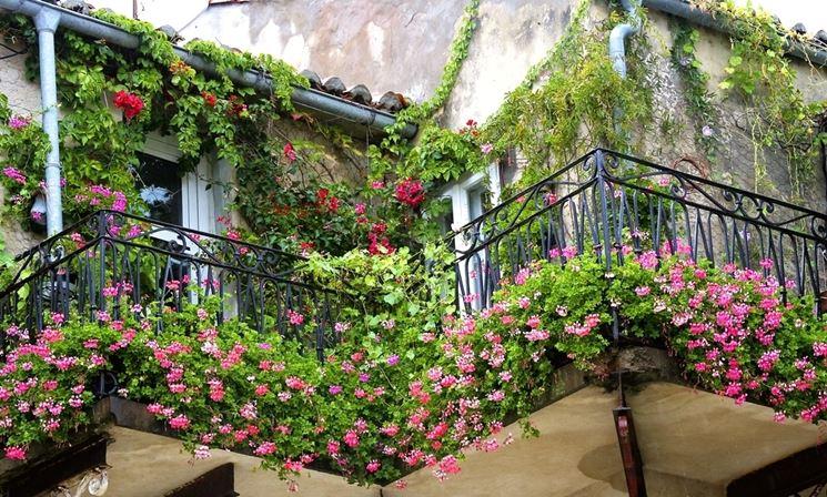 Rampicanti da balcone - Piante da appartamento - Pianta rampicante