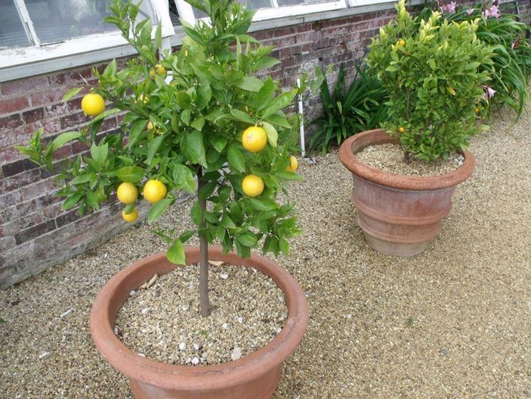 Terriccio Per Piante : Terriccio per agrumi piante da frutta tipo di terreno