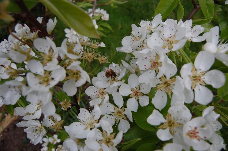 Alberi da frutto piante da giardino frutteto - Piante da frutto in giardino ...