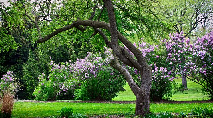 Alberi da giardino piante da giardino tipologie di - Alberi particolari da giardino ...