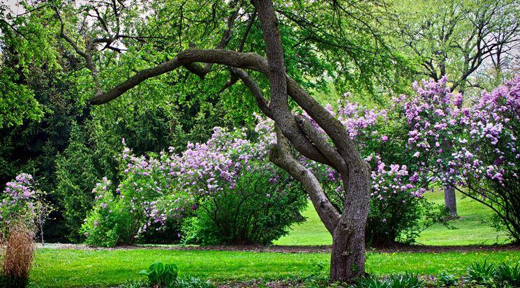 Alberi da giardino piante da giardino tipologie di - Alberi sempreverdi da giardino ...