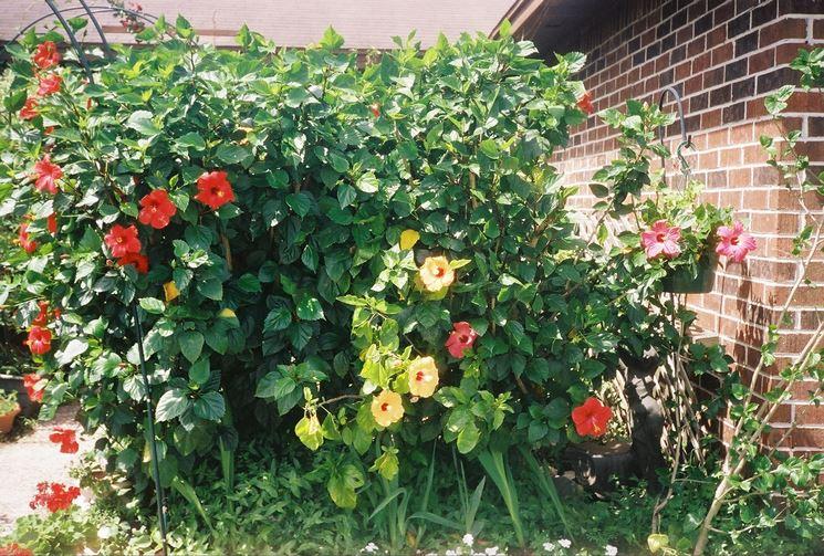 Alberi da giardino piante da giardino tipologie di - Alberi da giardino di piccole dimensioni ...