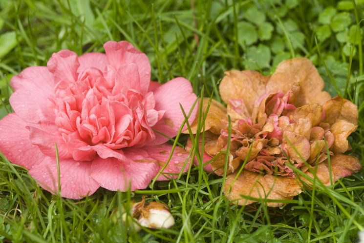 Malattie piante giardino