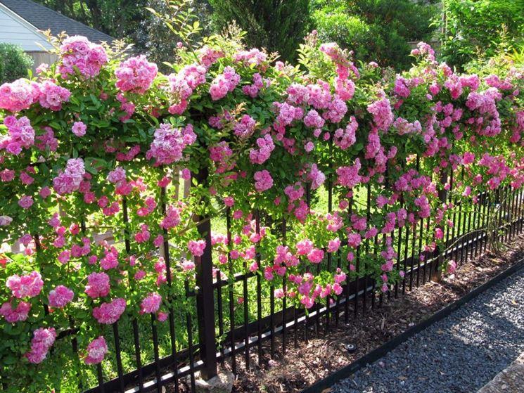 Fiori da giardino - Piante da Giardino - Decorazione giardini