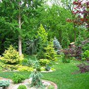 Le conifere naturali in giardino