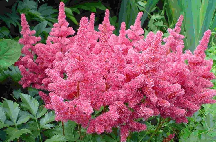 Piante all 39 ombra piante da giardino esposizione piante for Fiori da giardino