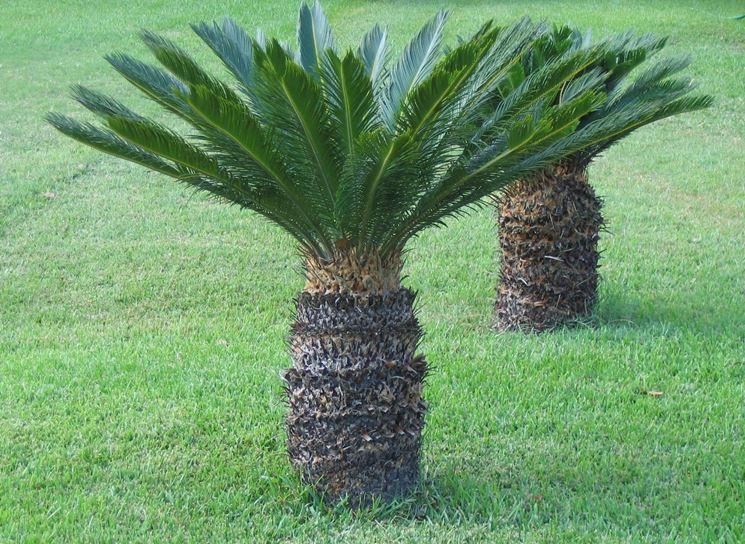 Piante da giardino piante da giardino for Piante profumate da giardino