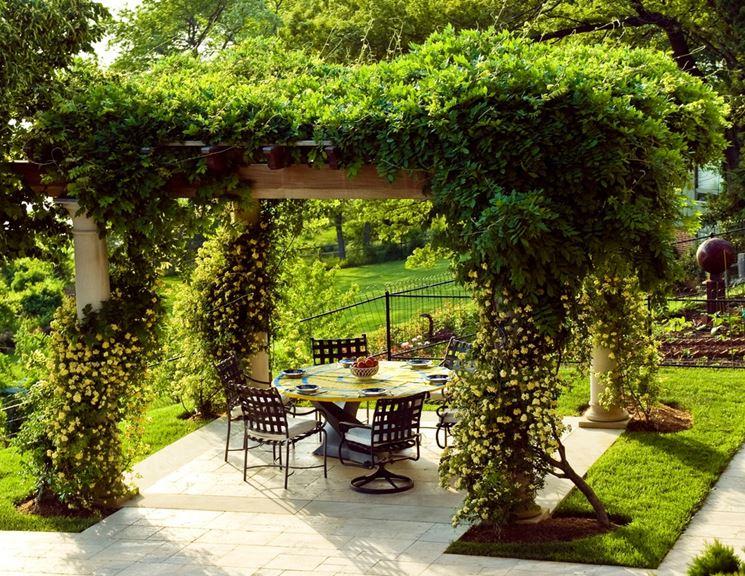Piante rampicanti piante da giardino caratteristiche for Piante da giardino rampicanti