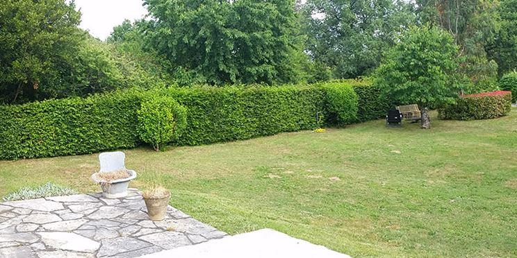 siepe in giardino