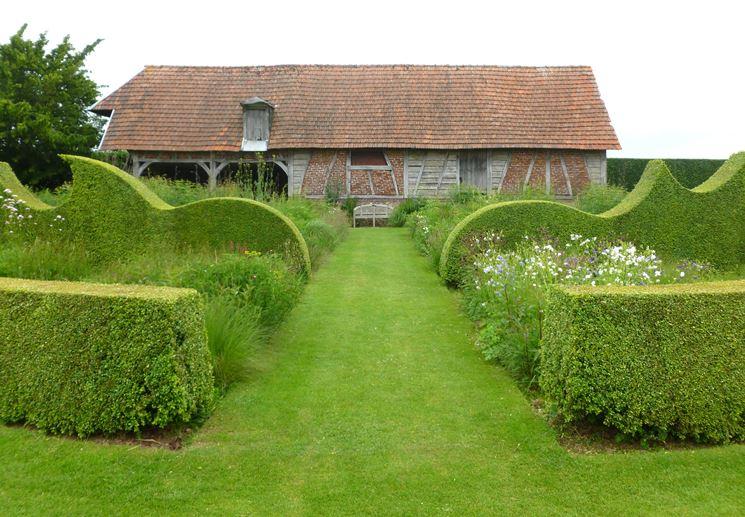 Siepi piante da giardino - Piante da giardino profumate ...