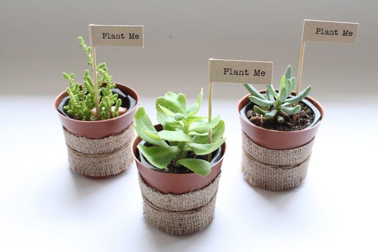 Favorito Bomboniere piante grasse - Piante Grasse - Bomboniera originale ZK18
