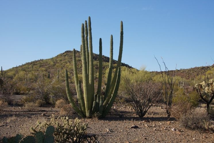 Cactus del deserto in Messico