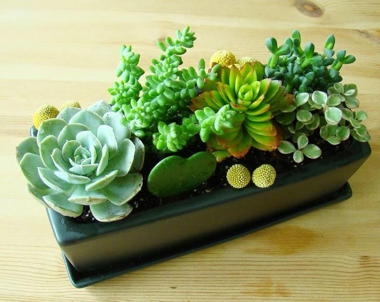 Composizione piante vasetto