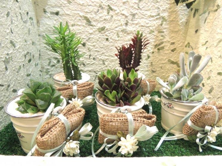 Esempio di piante grasse cartacee