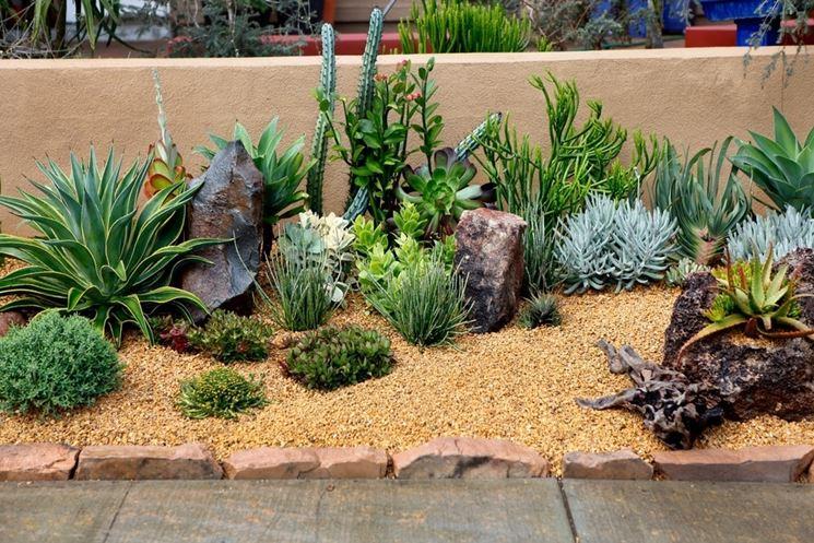 Piante grasse giardino