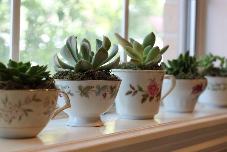 Piante grasse appartamento piante grasse piante grasse for Piante e fiori da appartamento