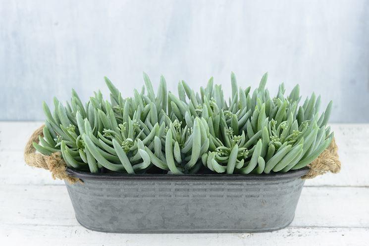 Piante grasse artificiali piante grasse pianta grassa - Piante grasse da esterno pendenti ...