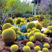 Tipi di Cactus