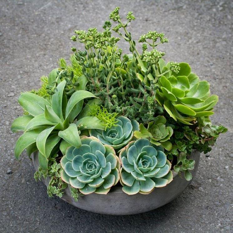 Piante grasse da esterno pendenti piante grasse da - Piante grasse da esterno ...